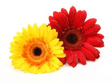 Free Color Flowers Stock Image - 21084471