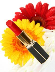 Free Decorative Cosmetics Royalty Free Stock Photography - 21084477
