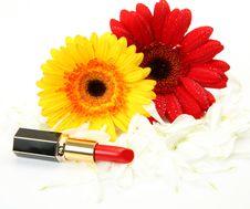 Free Decorative Cosmetics Royalty Free Stock Photo - 21084485