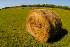 Free Hay Royalty Free Stock Images - 21084929