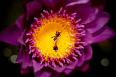 Free Trapped Bee Royalty Free Stock Photos - 21085128