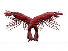 Crayfishes Stock Photos