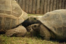 Free Very Big Tortoise Stock Photo - 21085510