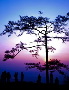 Big Tree Silhouetted On Sunrise Royalty Free Stock Images