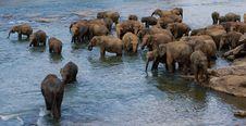 Elephants Bathing In Sri Lanka Royalty Free Stock Photos