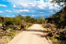 Free Safari Road In Kenya Royalty Free Stock Images - 21087209