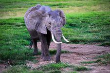 Free Baby Elephant Royalty Free Stock Images - 21087229