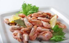 Free Coldwater Shrimps Stock Photography - 21088342