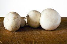 Free Champignon Mushroom Stock Images - 21089704