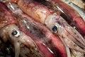 Free Squid Stock Photography - 21093532