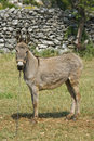 Free Donkey Standing In Front Of The Stonewall Stock Images - 21096704