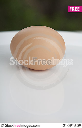 Free Egg Royalty Free Stock Images - 21091609