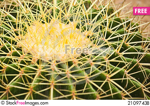 Free Cactus Close Up Royalty Free Stock Photos - 21097438