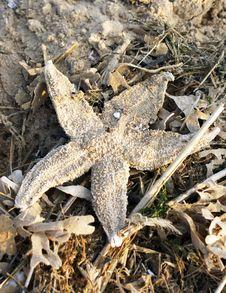 Free Starfish Stock Photo - 21090040