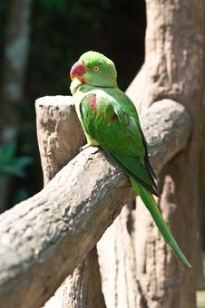 Free Green Parrot Stock Photos - 21090073