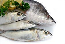 Free Fresh Raw Fish Stock Image - 21090291