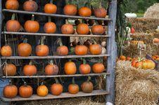 Free Pumpkin Display Royalty Free Stock Images - 21090619