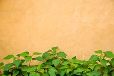 Free Green Plant And Yellow Wall Stock Image - 21090631