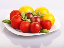 Free Tomatoes Stock Photo - 21090920