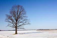 Free Tree In The Winter Stock Photography - 21091292