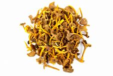 Free Funnel Chanterelle Stock Image - 21091731