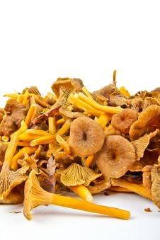 Free Funnel Chanterelle Royalty Free Stock Photo - 21091735