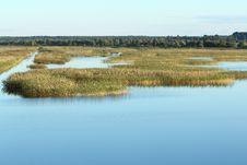 Free Overgrown  Lake Royalty Free Stock Image - 21092336