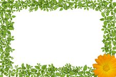Free Green Plant Frame With Yellow Flowers Royalty Free Stock Photo - 21092915