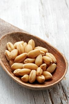 Free Sweet Dry Wheat Stock Photos - 21092993