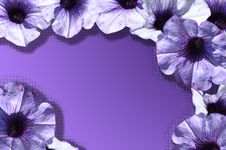 Free Violet Frame Royalty Free Stock Photo - 21093695