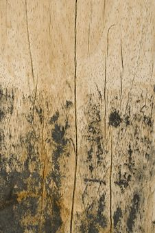 Wood Beach Plank With Vertical Cracks Stock Photos