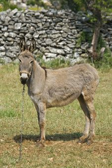 Donkey Standing In Front Of The Stonewall Stock Images