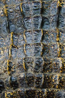 Free Abstract Pattern Crocodile Leather Background. Stock Image - 21096881