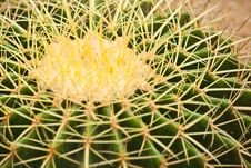 Free Cactus Close Up Royalty Free Stock Photos - 21097438