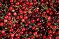 Free Basket Of Cherries Royalty Free Stock Photos - 2112468