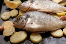 Free Gilthead Bream Stock Photos - 2110033
