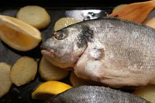 Free Gilthead Bream Royalty Free Stock Photos - 2110048