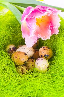 Nest With Easter Eggs Stock Photos