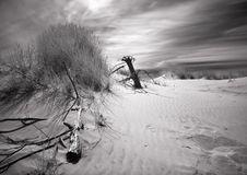 Free Dunes Stock Photo - 2110590