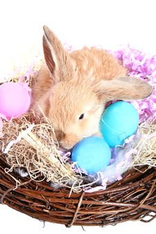 Free Bunny And Eggs Royalty Free Stock Photo - 2112315