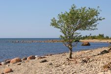 Free Tree And The Sea Stock Image - 2112821