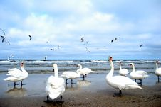 Free Birds On A Beach Stock Photography - 2112862
