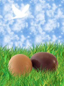 Eggs On The Grass Stock Photos