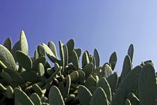 Cactus Plants And A Blue Sky Stock Image