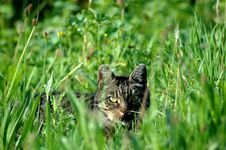 Free Striped Cat Stock Images - 2119454