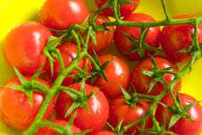 Free Tomatoes Stock Images - 2119644