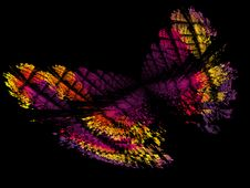 Free The Butterfly Royalty Free Stock Photos - 2119708