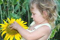 Free Toddler Girl With Sunflower Outdoor Stock Photo - 21101120