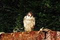 Free Bird Royalty Free Stock Images - 21102679