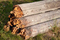Free Rotten Wood Stock Image - 21107321